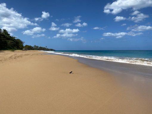 guadeloupe_beach