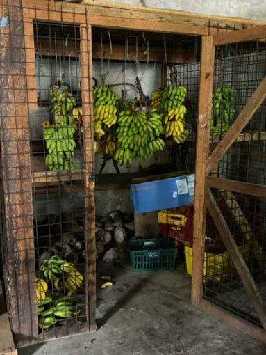 grenada-bananas